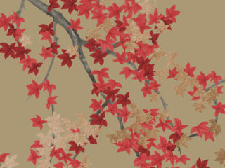 Asiana Collection-Maple